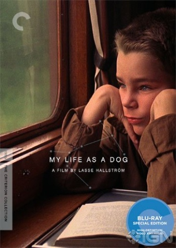 my-life-as-a-dog-the-criterion-collection-20110712105639599-000