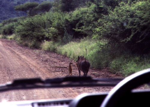 timon-and-pumbaa-real